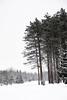 L'hiver, les arbres (ValerieBoulva) Tags: québec quebec canada hiver winter blanc neige snow arbre tree forêt forest fuji fujinon50mm20 xt1 nb noiretblanc noirblanc bw blackandwhite blackwhite