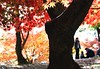 autumn colors-25 (itsuo.t) Tags: autumn autumnleaves autumncolors maple trees