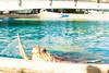 Tartaruga | Projeto Tamar | Praia do Forte | Bahia | Brasil (Leandro Rinco) Tags: brazil brasil praiadoforte bahia beach praia mar ocean sol tartaruga projetotamar sun turtle