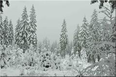 point of snow light (friedrichfrank1966) Tags: point snow light availablelight forest dust nebel dunst wald lichr winter natur siegerlandwittgentein germany hohenroth tannen schnee