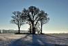 Season's Greetings (AndyorDij) Tags: trees tree silhouette snow snowy normanton normantonpark england rutland uk unitedkingdom 2017 andrewdejardin winter december