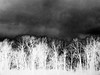 Winter Texturized 3 (Rossdxvx) Tags: dark textured texture tree textures trees texturized noir winter minimalism shadows silhouette abstract art 2017 lofi landscape blackandwhite overexposed outdoors otherworldly experimental experimentation eerie grim gloomy bleak grey skyline horizon