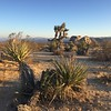 Joshua Tree, December 2017 (World of Good) Tags: california joshuatreenationalpark joshuatree