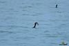 A-LUR_3201.jpg (OrNeSsInA) Tags: trasimeno byrd water lake landescape ornessina