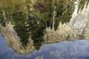 reflected (lawatt) Tags: merced river water reflection trees elcapitan yosemite sonya7 pentaxlens 35mm