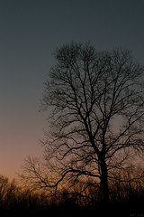 Sunset (glitterose01) Tags: tree pink orange blue grey red black forgotten old alone branches leaves garden nature outside outdoors
