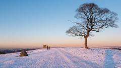 Happy New Year! (Maria-H) Tags: stockportdistrict england unitedkingdom gb snow lymepark lymecage tree winter disley cheshire uk olympus omdem1markii panasonic 1235