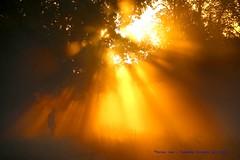 Walking towards to the future....... (law_keven) Tags: richmond richmondpark london england sunrise sunrays newyearseve light duchessbmjb 826 bricker