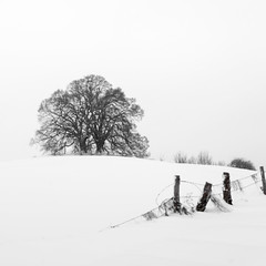 Happy New Year (hjuengst) Tags: winter winterbeauty snow 2018 happynewyear bavaria tree limetree ebersberg vogelberg