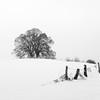 Happy New Year (hjuengst) Tags: winter winterbeauty snow 2018 happynewyear bavaria tree limetree ebersberg vogelberg