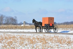 Cold in the Country. New Wilmington, PA (bobchesarek) Tags: buggy cold freezing padutch amish horse rural country pennsylvania