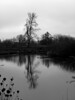 Winter Water (ambrknr) Tags: delta ponds western oregon eugene pacific northwest black white nature wetlands tree water