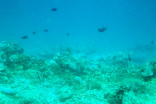 Gili Air Underwater