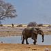 Quelea, elephants and more