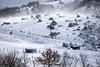 Tormenta (Massimo Feliziani) Tags: landscape horse horses view snow storm winter ice mountain paesaggio italiano marche sibillini cavalli cavallo wild scenic wind sunrise ghiccio tormenta neve nevicata inverno animali animal rural