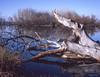 Winter on the Molonglo River (i-lenticularis) Tags: 1800dpiscan act australia canberra fujiga645 fujirvp50velvia mediumformatslidefilm reversedinscanholder molongloriver epsonv700photoscan