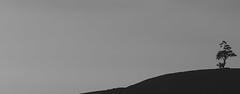 The tree on the hill (ŧŵ) Tags: tree hill landscape blackandwhite black white art abstract sonymirrorless sonya7rii ilce7rm2 silhouette travelphotography srilanka nuwaraeliya monochrome mountains mountain empty emptyspaces