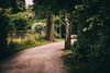 The road (PhotographerJockeFransson) Tags: vsco cam 85mm sweden canon eos 6d green brown