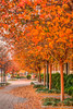 Fall Colors 2017 (Ian Aberle) Tags: 2017 copyright©2017ianaberle dallas fall hdr smu southernmethodistuniversity tx texas universitypark winter campus campusbeauty college dfw students tonemapped university unitedstates exif:focallength=50mm camera:make=sony exif:make=sony geo:state=texas exif:model=ilce6300 geo:location=southernmethodistuniversity exif:aperture=ƒ56 camera:model=ilce6300 exif:isospeed=200 geo:country=unitedstates geo:city=dallas exif:lens=epz1650mmf3556oss us