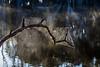 A tangled web we weave (dmunro100) Tags: web spider lake lagoon kangarooisland sunrise spring southaustralia