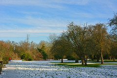 Winter (Caulker) Tags: canonspark snow trees sun winter