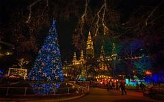 Christmas in Vienna (try...error) Tags: wien tree decoration lights christmas market adventmarkt weihnachtsmarkt blue yellow red rathaus christkindlmarkt weihnachten