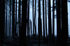 Dusk (Kristian Francke) Tags: nature bc canada outdoors pentax natural landscape contrast beautiful dusk snow snowy winter weather tree trees forest woods wilderness woodland