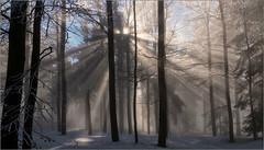 Die Sonne kommt / The sun is coming (ludwigrudolf232) Tags: winter hirschenstein sonnenschein