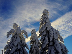 három királyok / three kings (debreczeniemoke) Tags: tél winter túra hiking hegy mountain kakastaréj creastacocoşului gutin erdély transilvania transylvania roosterspeak hó snow táj land tájkép landscape magaslat height csúcs top kilátás view olympusem5