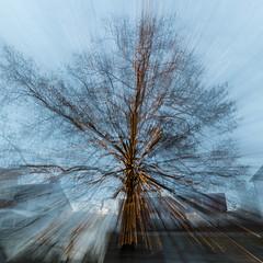 Lichterbaum (markus.strebel) Tags: bremgarten aargau schweiz ch eos5d langzeitbelichtung markusstrebel weihnachtsbeleuchtung baum