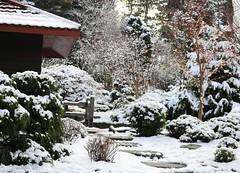 Japanese garden in the snow (joybidge) Tags: trishcanada naturepatternscanada victoriabc cuthbertholmespark