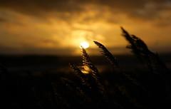 Last light (SteveJM2009) Tags: sunset poole harbour reeds clouds water sky focus dof dorset uk colour sun light january 2018 stevemaskell naturethroughthelens