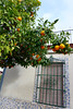 Santiponce! (domit) Tags: santicponce italica spain sevilla orange tree