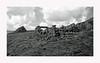 Aubrac (Yvan LEMEUR) Tags: aubrac ruines buron vieillespierres pastoralisme lozère extérieur landscape paysage ciel nb noiretblanc blackandwhite bw