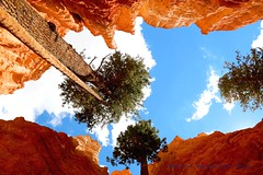 Things Are Looking Up......... (law_keven) Tags: brycecanyon utah usa america holiday vacation roadtrip mountains photography landscape landscapephotography rocks trees orange canyon