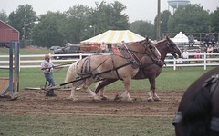 Butler Farm Show 2017 (rentavet) Tags: analog butlerfarmshow butlerpa drafthorses dynax505si konicacenturia400asa