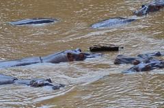 DDR_4060 (Santiago Sanz Romero) Tags: kenya wildlife animales ngc