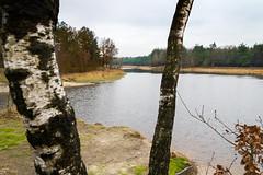 Loofles (johan wieland) Tags: 2017 kootwijk loofles veluwe winter staatsbosbeheer