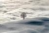 Lonely Tree (Swiss.PIX) Tags: suíça svizra switserland schweiz switzerland sony suisse suiza svizzera szwajcaria švýcarsko švice sun snow sea fog foggy seaoffog nebel nebelmeer hügel hill winter schnee schwyz sattel hochstuckli fineart mystic misty tree baum arbre mer brouillard merdebrouillard white clouds landscape blackandwhite a7rii sel85f14gm dream dreamy fairytale