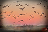 birds birds tx 2 (schlumpfita) Tags: salinassanpedro sea mar murcia marmenor seagulls gaviotas salinas menor