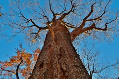Tree (namhdyk) Tags: tree forest woods autumn winter canon canonpowershot canonpowershotg7x