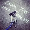 RIP, Kiko (Bill Adams) Tags: kikokikoshinyuu bordercolliemix bordercollie blueheelermix blueheeler dog rip instagram