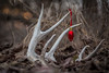 Tis the Season! (Browtine1) Tags: christmas decorations red deer antler shed whitetail canon 5d