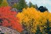 Colori autunnali presso Bionaz (giorgiorodano46) Tags: ottobre2016 october 2016 giorgiorodano nikon italy valdaosta valléedaoste valledaosta valpelline autunno autumn automne herbst colors colori foliage