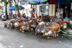Na drůbežím trhu (zcesty) Tags: zvířata vietnam18 ulice stánek slepice prodavač domorodci vietnam haiphong dosvěta hảiphòng vn