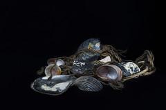 Dead sea shells (Alexander Pugatschewski) Tags: shell oyster dead rope hemp marine black background texture
