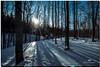 DECEMBER 2017  NGM_7026_3668-1-222 (Nick and Karen Munroe) Tags: sun sunlight snow sunset sunsetting sunburst snowfall snowstorm snowy winter woods weather wintertrees winterstorm wintry winterwonderland canada colour color colors colours beauty brampton beautiful brilliant nikon nickmunroe nickandkarenmunroe nature nickandkaren nick d750 nikond750 1424 1424f28 nikon1424f28 munroedesignsphotography munroedesigns munroephotography munroe karenick23 karenick karenandnickmunroe karenmunroe karenandnick karen ontario outdoors ontariocanada landscape