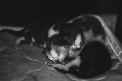 i just came!! (obyda) Tags: baby kitten kittens cat cats blackwhite bnw black blackandwhite natural nature animals