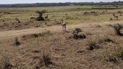 2017-12-28 15.24.02 (dcwpugh) Tags: travel nairobi kenya safari nairobinationalpark
