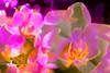 Orchids (FotoCorn) Tags: flowers macro happymacromonday flora flower doubleexposure macromondays macromonday hmm happymacromondays bloem orchids